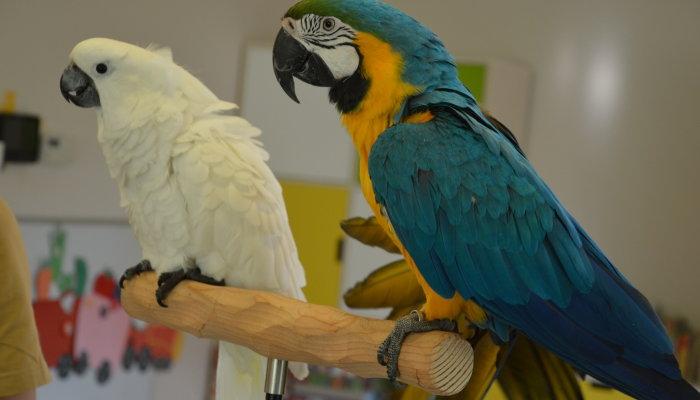 Zajęcia przyrodnicze z papugami